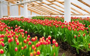 В Совете Федерации предложили снизить НДС для цветоводов